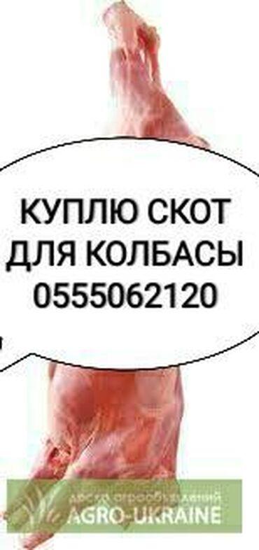 Бараны романовской породы купить - Кыргызстан: Куплю скот на забой в колбасный цех любой упитанности и любого
