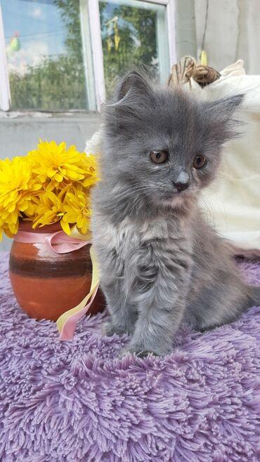 trebujutsja modeli na besplatnuju strizhku в Кыргызстан: Мы дружные котята, ищем себе дом и семью. Мы еще совсем маленькие, нам