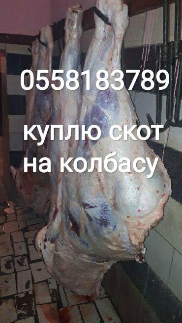 животный-с в Кыргызстан: Куплю любой скот на колбасный
