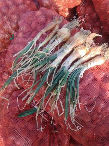 Продаются лук мелькие и дутки для салат в Сокулук