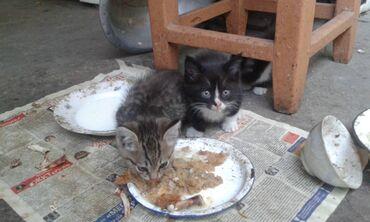 Животные - Маловодное: Котята, отдам добрым людям в хорошие руки,мать ловит мышей и крыс