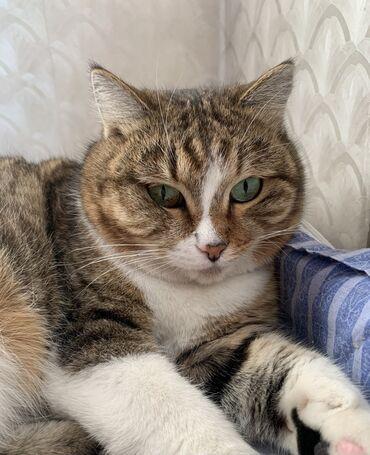Кошка. 1,5 года. Стерилизованная. Проблахована