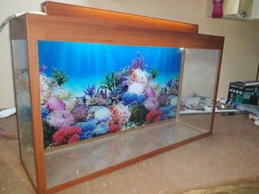 Bakı şəhərində Teze akvarium uzunu 70sm