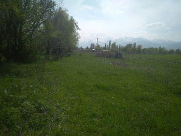 продам теленка в Кыргызстан: Продам 23 соток