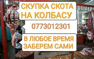 веб камера с микрофоном для компьютера купить в Кыргызстан: Куплю коров бычков тёлок и лошадей любой упитанности в колбасный