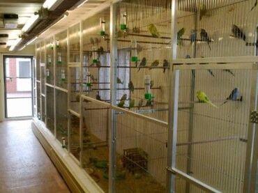 Волнистые попугаи 🦜