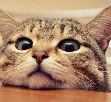 Возьму котёнка(кабеля) в хорошие руки или за символический 10 сом ))