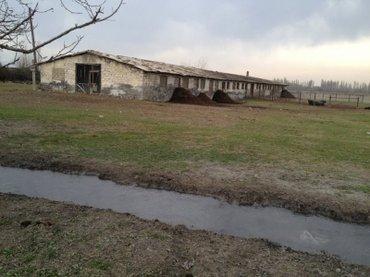 Tovuz şəhərində Tovuzda ceyrançöl də ferma satılır, 544 hektar ərazisi var