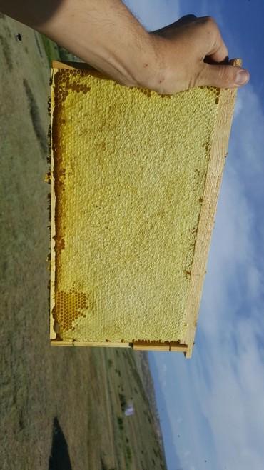Продаю горный мёд, вторая качка 2020 цена оптом