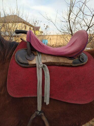 Ээр токум жасоо - Кыргызстан: Продаю седло (ээр токум)