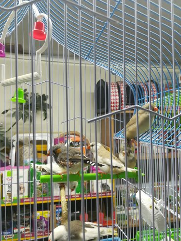 Попугаи от 650 и выше. амадины 600с в Сокулук