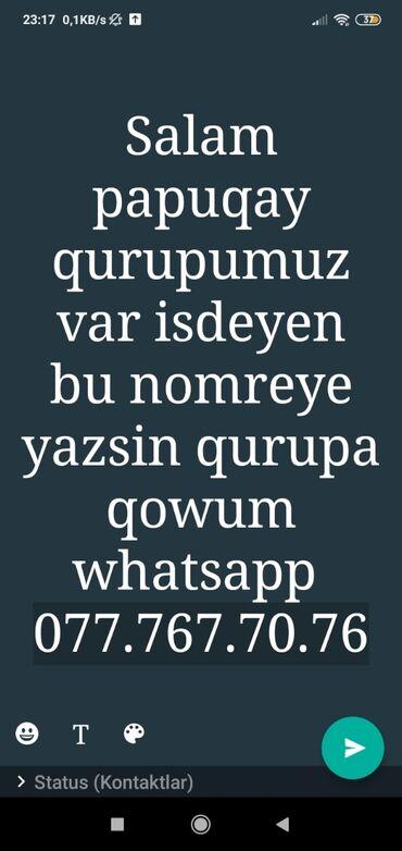 jako papuqay satilir - Azərbaycan: Papuqay qrup