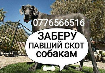 С/х животные - Кыргызстан: УТИЛИЗАЦИЯ ПАВШЕГО СКОТА В ЛЮБОЕ ВРЕМЯ
