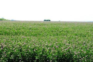 Продажа земельных участков в Кыргызстан: Продам 1800 соток Для сельского хозяйства от собственника