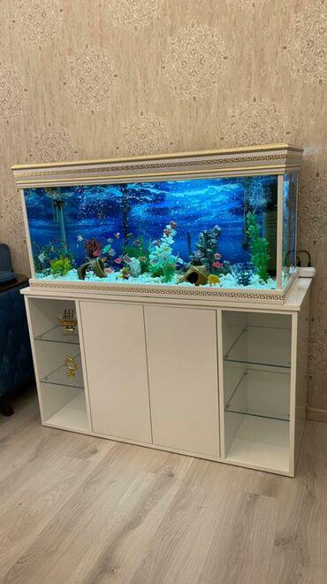 Hazir akvariumdur. Olculeri: 40x60x110 cm dir. 4 aydir mendedir