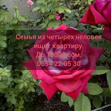 Сниму - Бишкек: Район Политех или Госрегистр