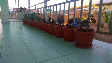 Продаются комнатные растения, отлично в Кок-Ой