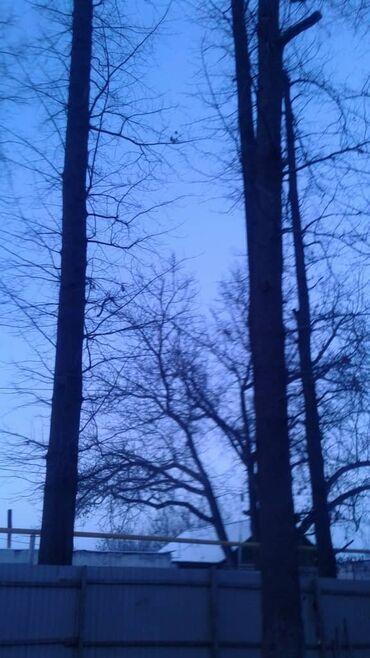 Пилим высокие тополя деревья по выгодным ценам