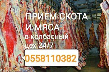 стеклянная колба для кофеварки bosch в Кыргызстан: Принимаем в колбасный цех скот и вынужденный забой скота в любом виде