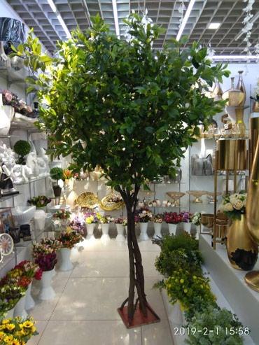 Точные ботанические копии деревьев. В в Бишкек