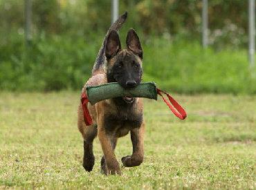 защита от собак в Кыргызстан: Профессиональная дрессировка собак!