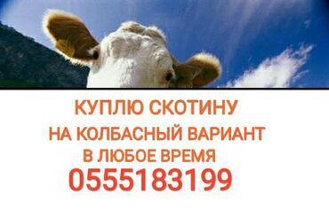 ксерокс купить в Кыргызстан: В колбасный цех куплю коров телок лошадей в любое времядорого. без