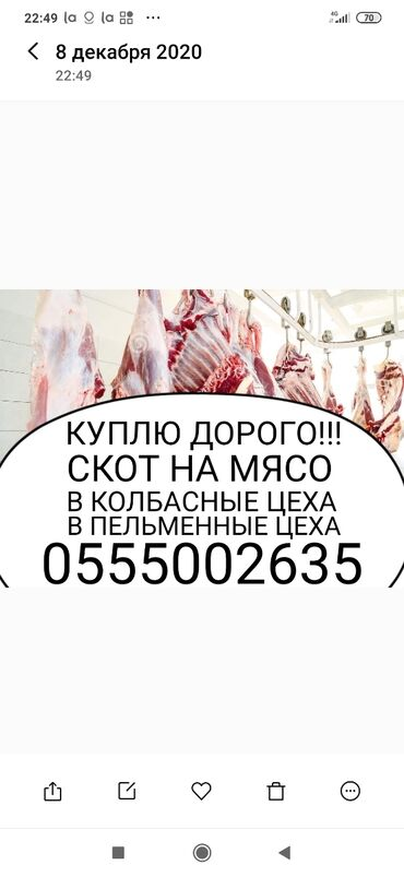 дрон с камерой купить в Кыргызстан: КУПЛЮ СКОТ И ВЫНУЖДЕНЫЙ ЗАБОЙ СКОТА В ЛЮБОЕ ВРЕМЯ ПО МАКСИМАЛЬНОЙ ЦЕНЕ