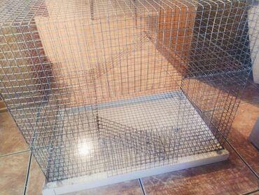 Крысы - Кыргызстан: Продается клетка 800