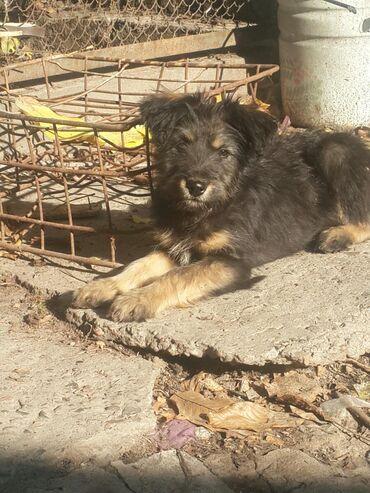 164 объявлений   ЖИВОТНЫЕ: Отдадим щенка 3 месяца (девочка) в добрые руки