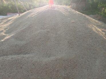 Животные - Арчалы: Арпа сатам 28 сомдон 6 тонна
