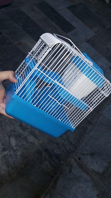 Bakı şəhərində Xamyak,cunqarik(hamster) ucun teze qefes. Icinin aksesuarlari ustunde