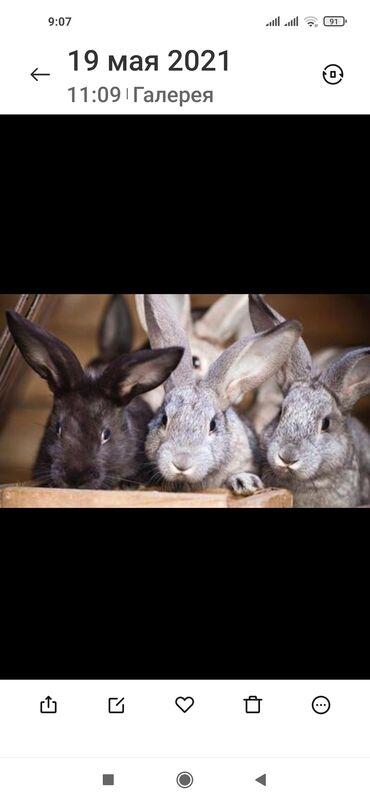 Животные - Кировское: Продаем кроликов молодняк