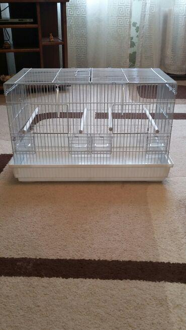 1077 объявлений: Новая клетка для попугаев. Клетка с поддоном. Размер : длина 55, шир