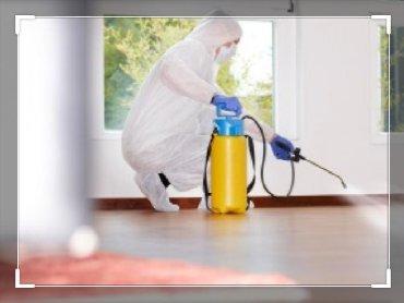 Уничтожение тараканов, клопов, блох и д.р. насекомых Дизинфекция