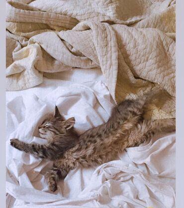 2694 объявлений: Котята !!! Отдаём котят !!! Возраст 3-4м Девочки