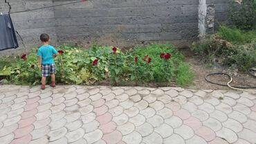 cisternu 5 kub в Кыргызстан: Продам Дом 8 кв. м, 5 комнат