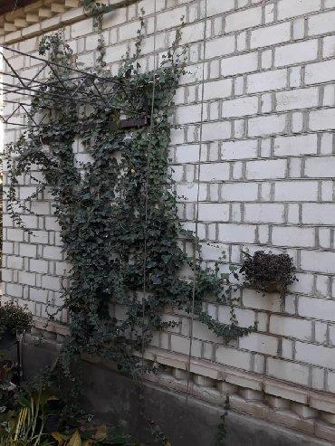дача-светлое в Кыргызстан: Продам Дома от собственника: 60 кв. м, 3 комнаты
