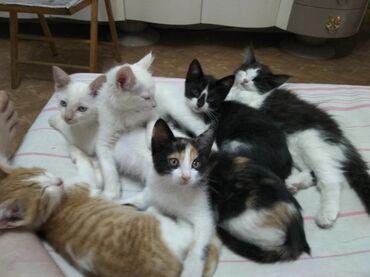 Животные - Бишкек: Коты