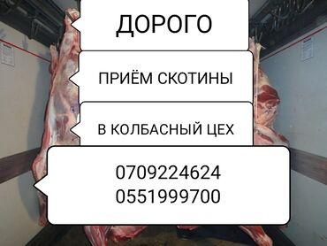 кулер для воды in Кыргызстан | КУЛЕРЫ ДЛЯ ВОДЫ: Куплю | Другие с/х животные | Круглосуточно, Любое состояние, Забитый