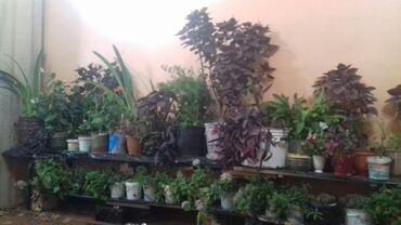 Другие товары для сада