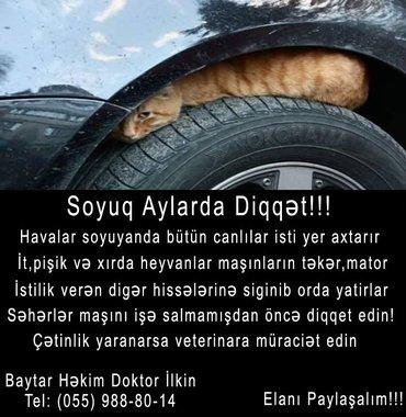 Bakı şəhərində Baytar-Veterinar Həkimi