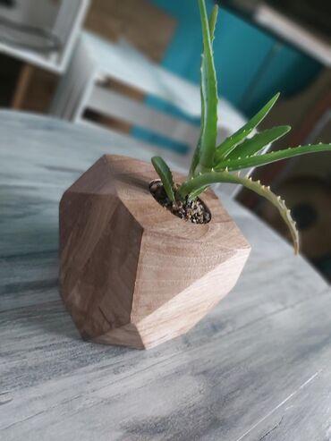 Drvene naocare - Srbija: Dekorativne drvene saksije za kaktuse