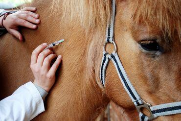 Услуги ветеринара - Кыргызстан: Услуги Ветеринара Опытный Ветеринар со стажом более 25 лет. Все виды