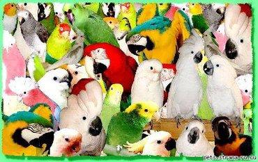 Продаются все попугаи мира  в Бишкек