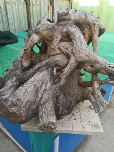jubka na vysokoj posadke в Кыргызстан: Продаю коряжник для рептилий в террариум. Р-р примерно 50 ×50 ×50