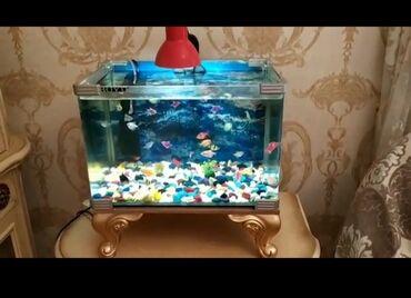 filter - Azərbaycan: 170 mann. Akvarium satılır.İcerisinde 35den çox balıq terneciya bütün