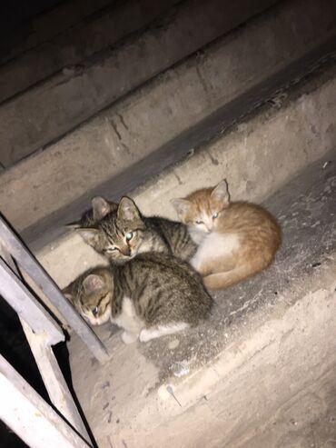 Уличные котята.Малыши ищут себе дом!Всего их 4 : девочка и 3