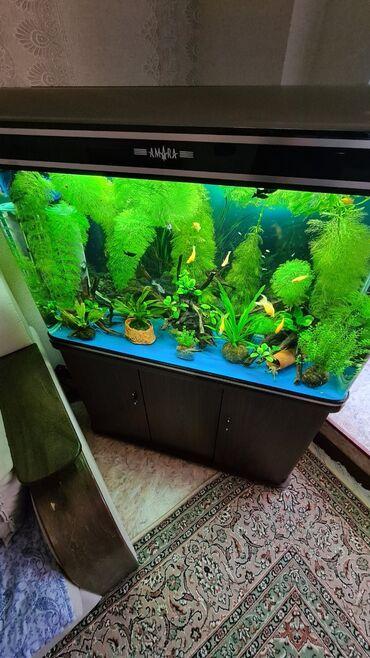 Продаю Аквариум полностью оборудованый с рыбками, растениями, корягами