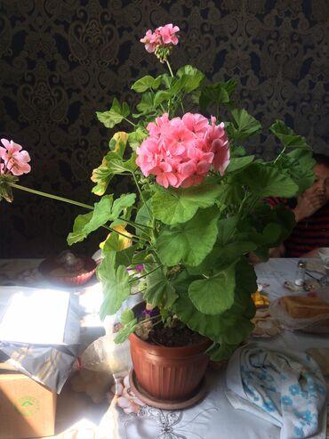 гул букет в Кыргызстан: Гул сатылат.Продаётся цветы