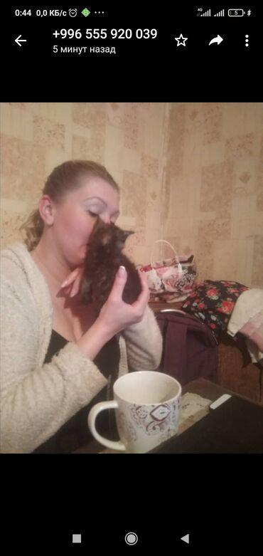 Котенка отдам очень любящим хозяевам